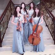 Max弦乐团