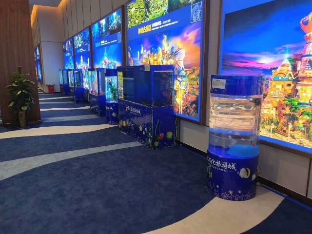 安庆专业海洋动物表演及海洋生物展览!