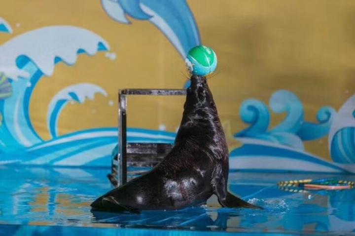 泰州我团专业承接各种室内外海狮表演活动