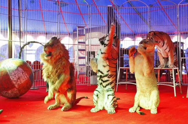 济宁海狮表演 海豹展览 马戏团表演 死亡轮表演 环球飞车表演 大象表演展览 外籍马术表演