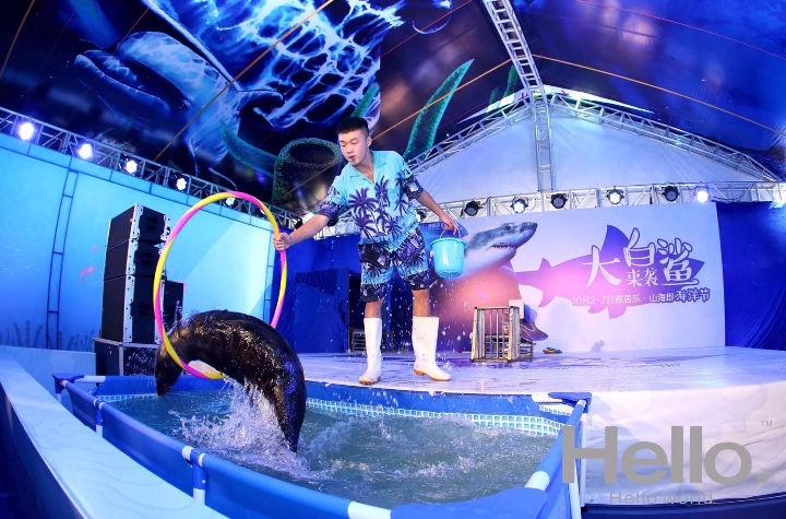 济宁海狮表演,马戏团,大象表演,死亡轮,环球飞车,各种动物资源皆有,档期充足,预定优惠